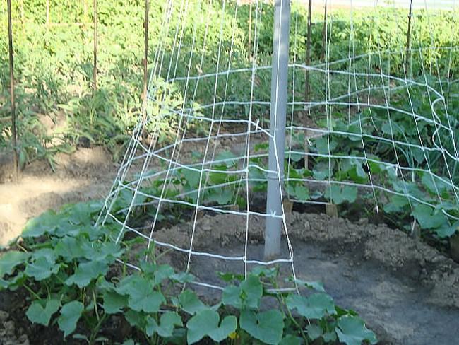 Строим пирамиду для лучшего урожая огурцов 2