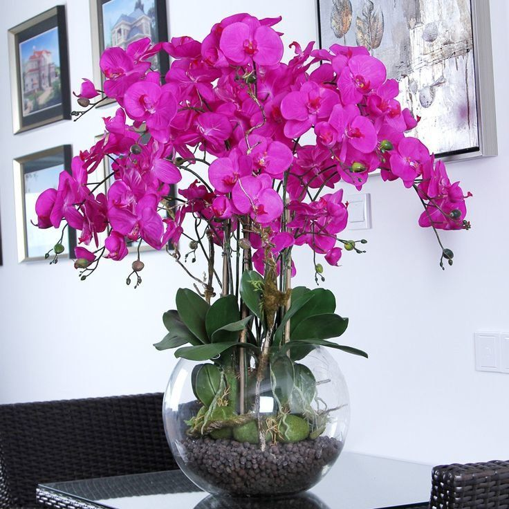 Чеснок как спасение для орхидей 0