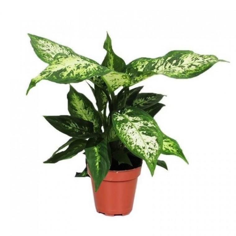 Какие растения не стоит держать дома 0