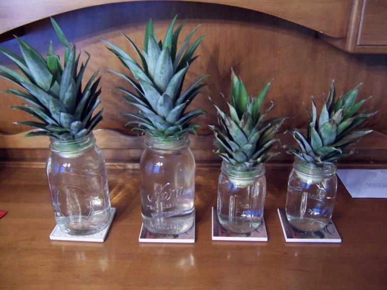 Как вырастить ананас дома 1
