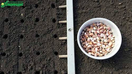 Чем сделать ямки для рассады в земле 1