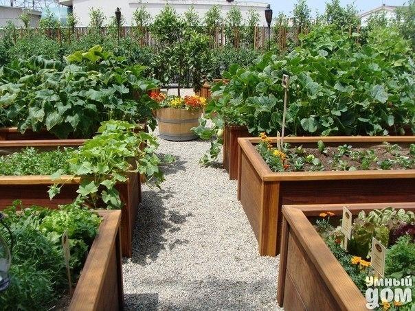 Памятка садовода-огородника 0