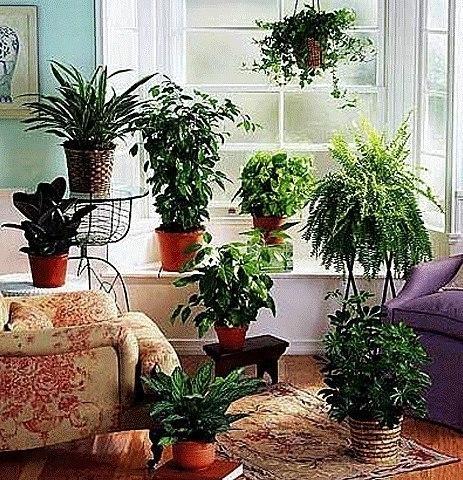 6 бабушкиных советов для комнатных растений . 0