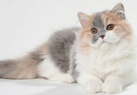 Советы владельцам кошек, или как избавиться от кошачьей шерсти повсюду.  0