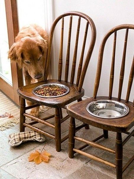 Столик для питания собак из ненужных стульев 0