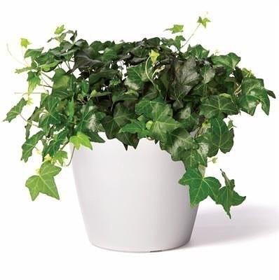 Растения-пылесосы 0