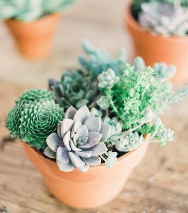 10 неприхотливых растений для тех, у кого нет времени. 0