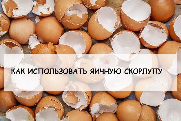 Как можно использовать яичную скорлупу на даче? 0