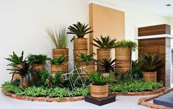 10 растений, которые принесут в Ваш дом любовь, семейную гармонию и счастье 0