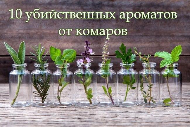 10 убийственных ароматов от комаров. 0