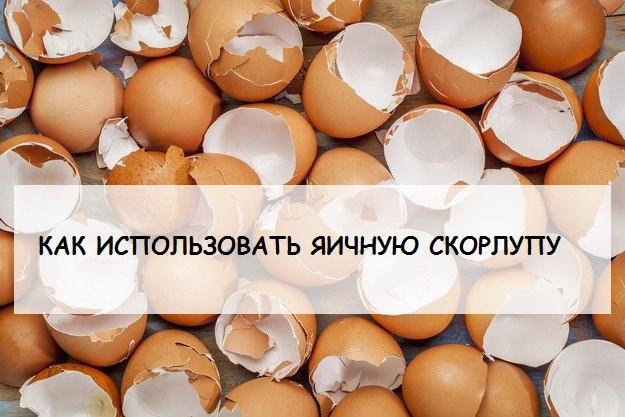 Как можно использовать яичную скорлупу на даче 0