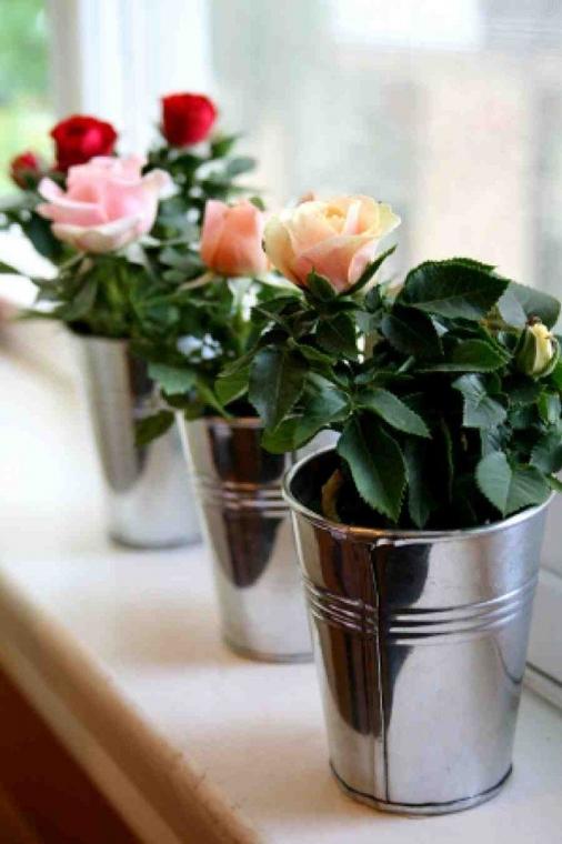 Как вырастить розу из срезанного цветка 0